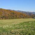 125_2501 野草の丘(ヤッホーの丘)