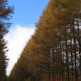 148_48552 八ヶ岳高原ロッジへのカラマツ並木
