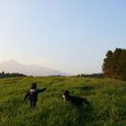 Img_68832 野草の丘(ヤッホーの丘)