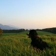 Img_69012 野草の丘(ヤッホーの丘)