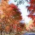 Img_70482 八ヶ岳倶楽部周辺の紅葉