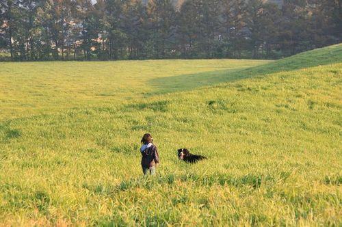 Img_68802 野草の丘(ヤッホーの丘)