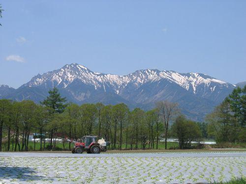 140_40612 野辺山の野菜畑と八ヶ岳