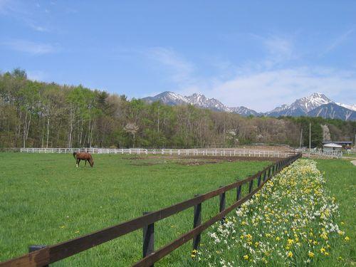 Img_65742 谷口牧場と水仙