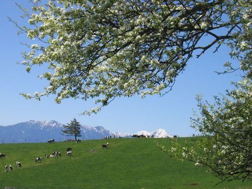 Img_67962 八ヶ岳牧場から南アルプスを望む