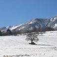 128_28632 八ヶ岳牧場