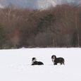 Img_00062 雪遊び