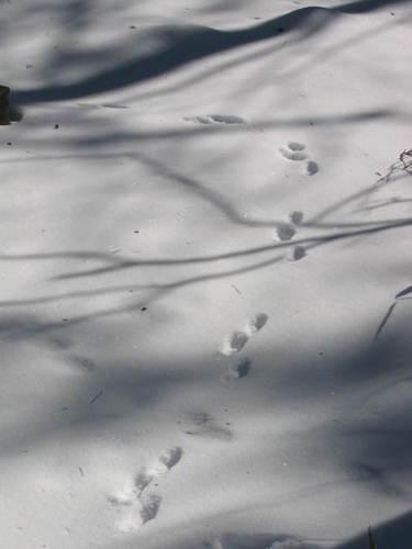 111_1183 野生動物の足跡