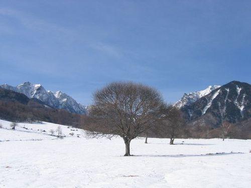 131_31012 八ヶ岳牧場のヤマナシの木